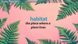 Plant Habitats Lesson for Kids