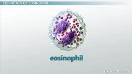 What Are Eosinophils? - Definition & Function