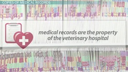 What is a Veterinary Medical Record?