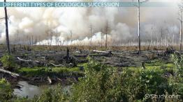 What Is Ecological Succession? - Definition, Types & Stages