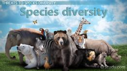 What is Species Diversity? - Definition, Importance & Examples