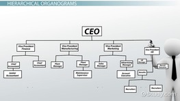 What is an Organogram? - Definition, Structure & Example