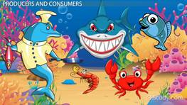 Ocean Food Chain: Lesson for Kids