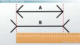 definition and the five stages of perception Answerthe three steps of the perception process are selection, organization, and interpretation.