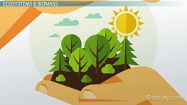 What Is Biomass? - Definition & Explanation