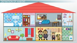 What Is Habitat? - Definition & Explanation
