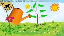 Macronutrients Micronutrients In Plants Video Lesson Transcript Study Com