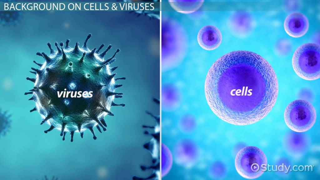 Comparing Cells To Viruses Genetic Material Reproduction Video