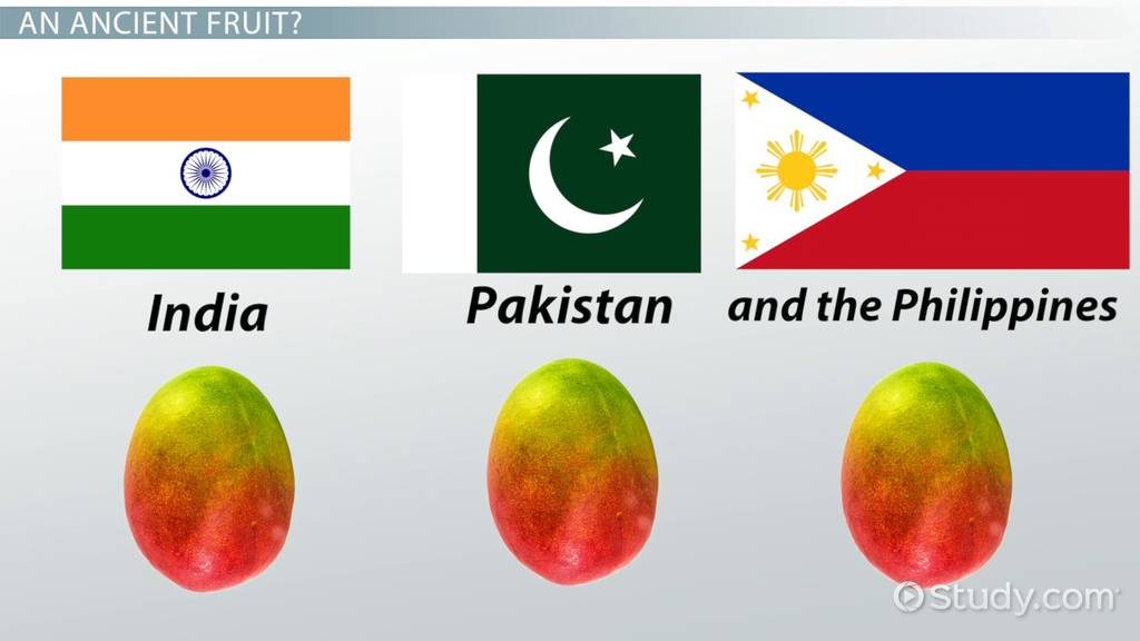 About Mango Fruit: Lesson for Kids - Video & Lesson Transcript ...