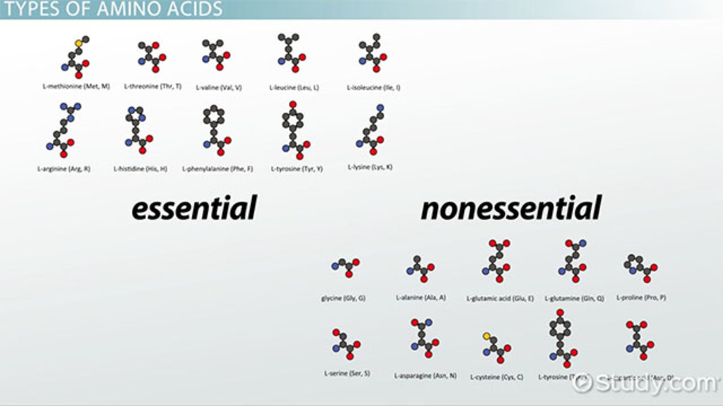 What Are Amino Acids Definition Structure Video Lesson