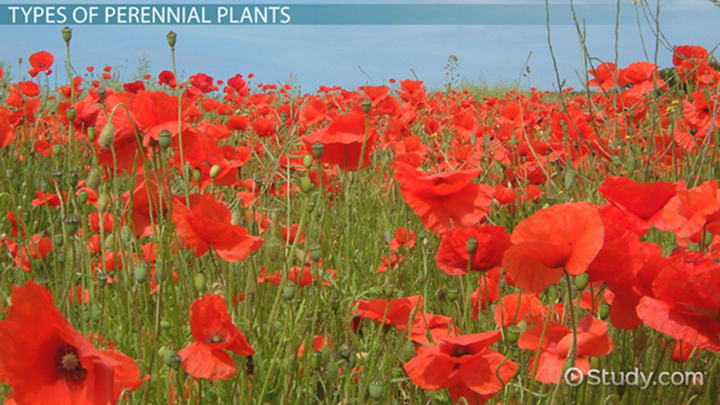 What Are Perennial Plants? - Examples & Types - Video ...