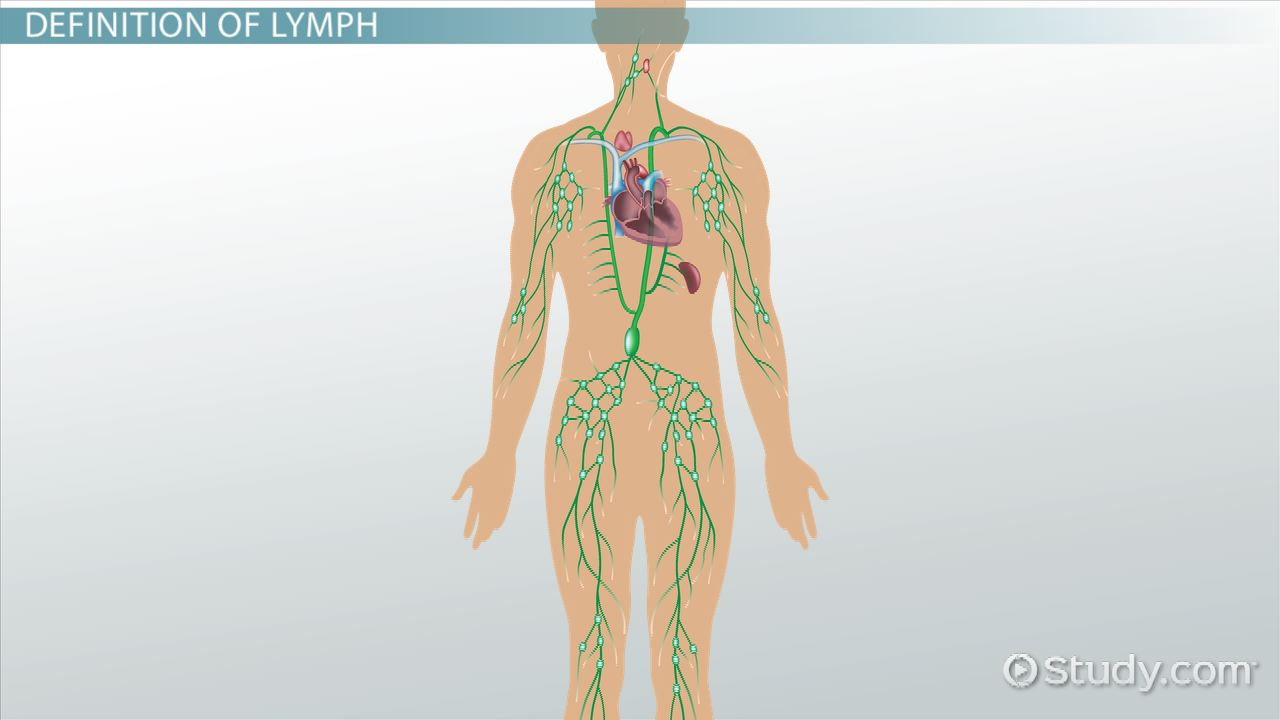 What is a Lymph? - Definition & Anatomy - Video & Lesson Transcript ...