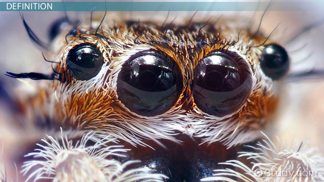 What Is An Arachnid Definition Characteristics