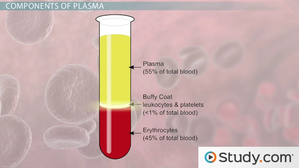 What Is Blood Plasma Function Components Video Lesson