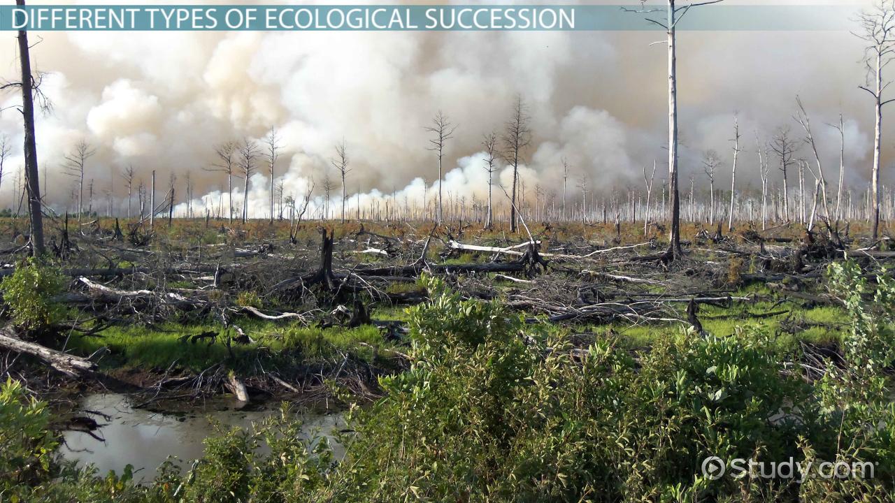 Worksheets Ecological Succession Worksheet what is ecological succession definition types stages video lesson transcript study com