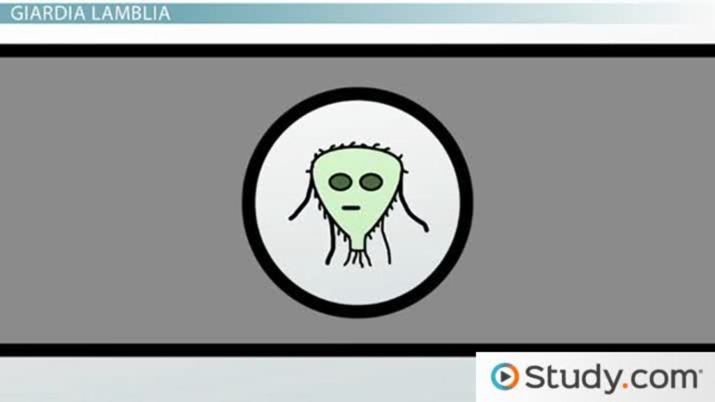 protozoa organisms what are protozoa definition characteristics examples