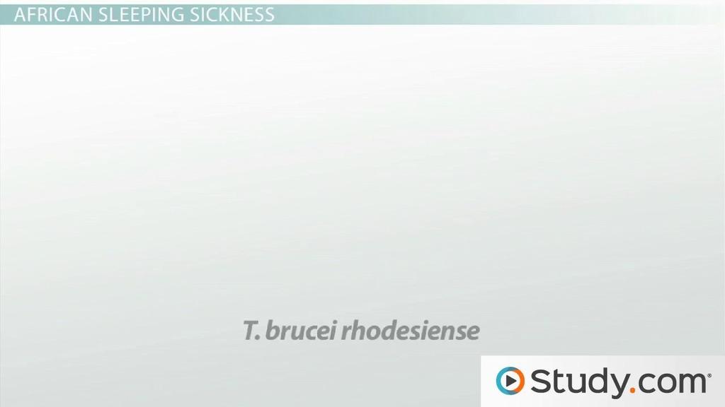 trypanosoma brucei rhodesiense symptoms
