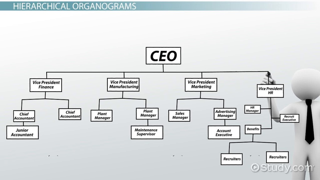 What is an organogram definition structure example video