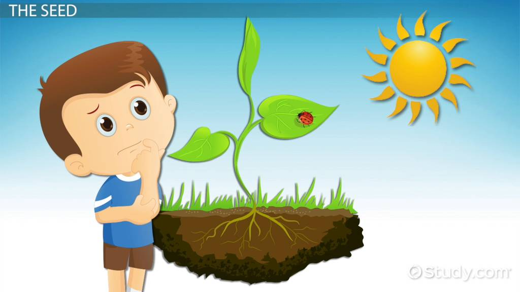 How Plants Grow  Lesson For Kids