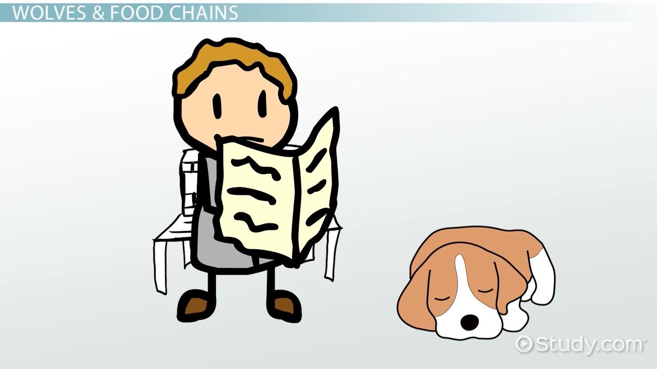 worksheet Food Chain Worksheet High School wolf food chain video lesson transcript study com