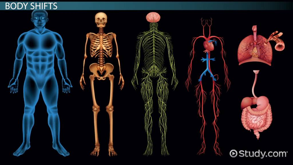 Interaction Among Body Systems Movement Video Lesson