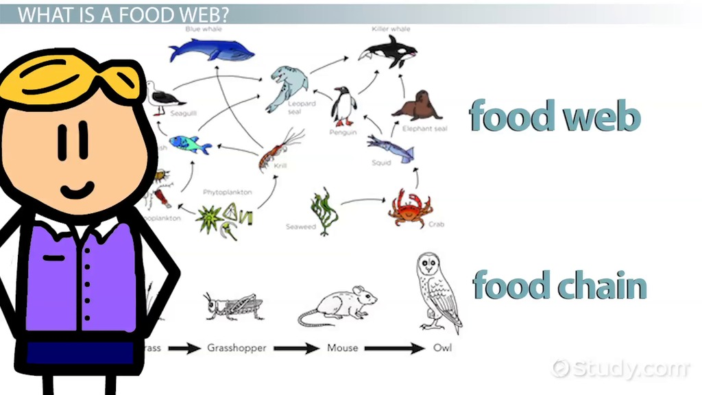The Food Web Of The Arctic Ocean Video Lesson Transcript Study