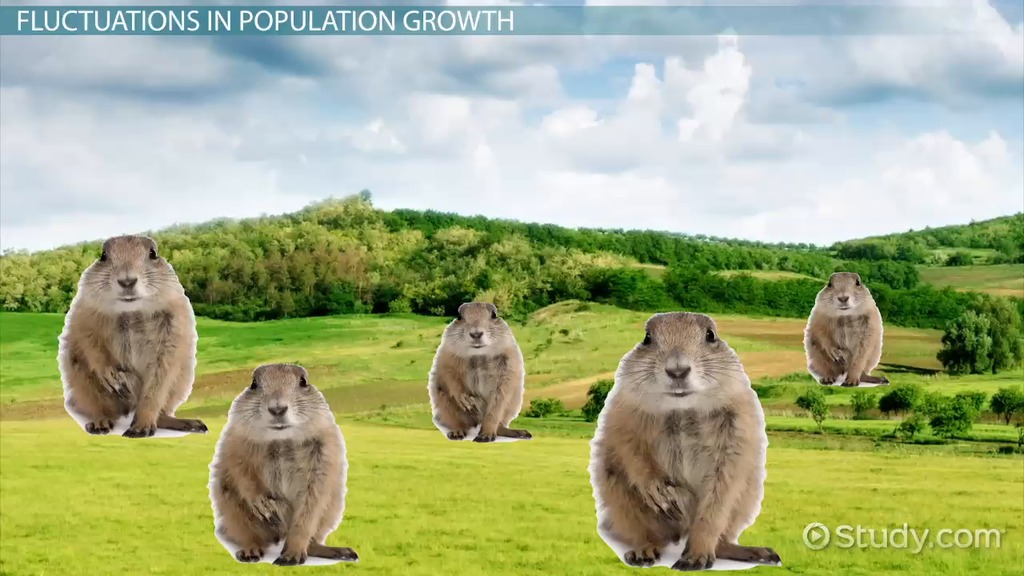 essay on human population grows up The population growth rate of human beings is quite worrying (human overpopulation causes  when birth rates go up.