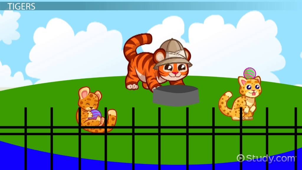 what do tigers eat  - lesson for kids