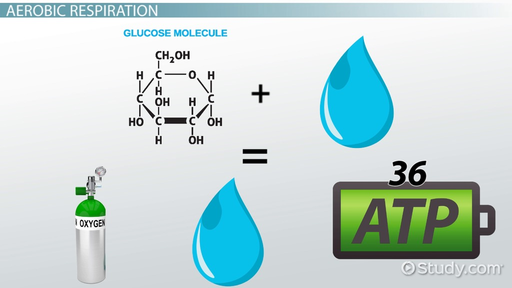 Types of cellular respiration video lesson transcript study ccuart Choice Image