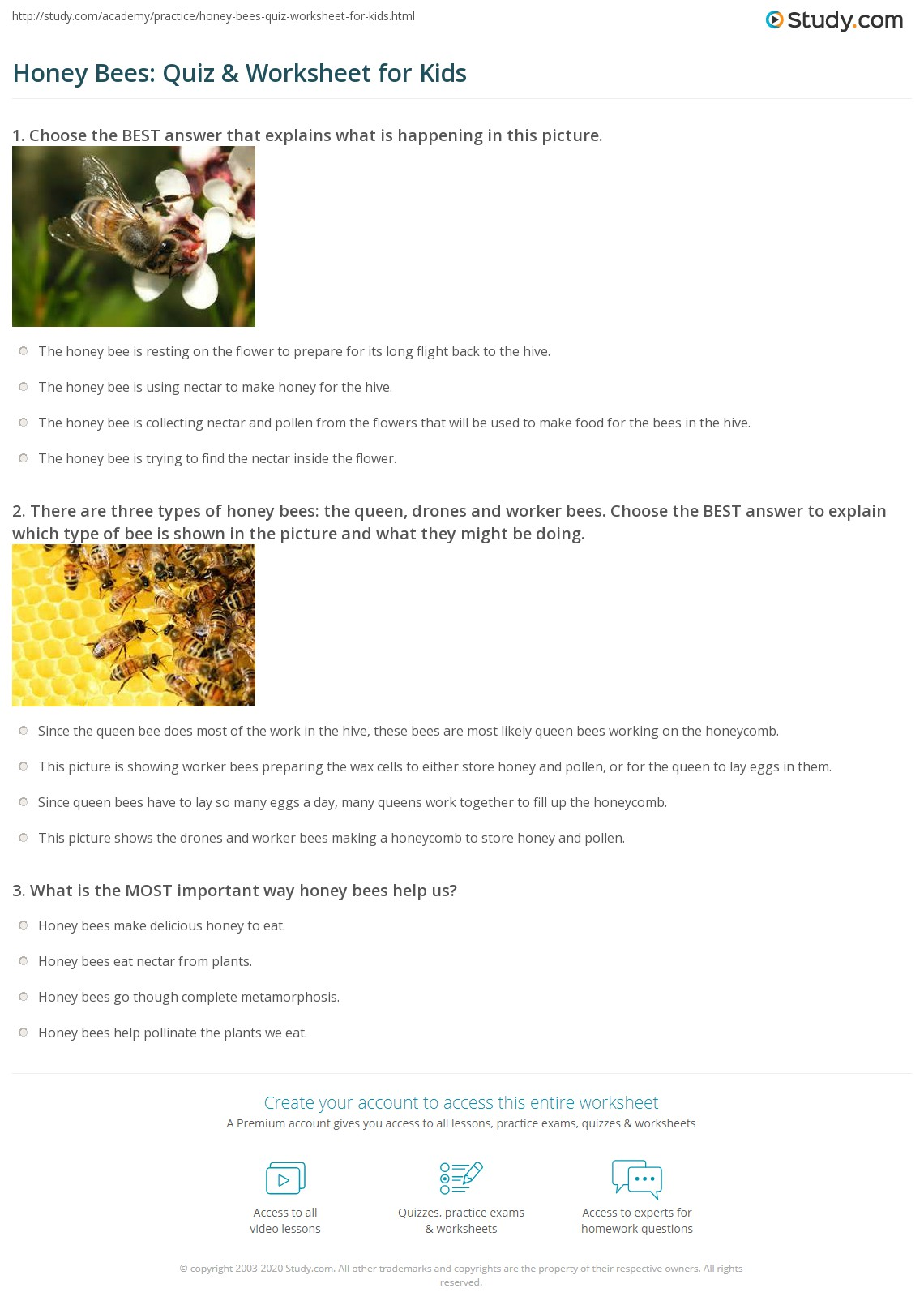 honey bees quiz u0026 worksheet for kids study com
