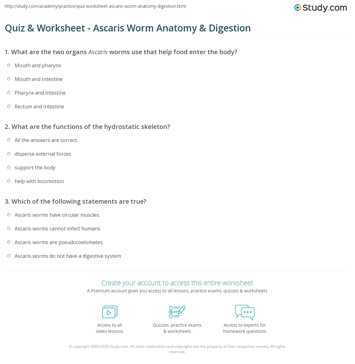 Shark Internal Anatomy Quiz quiz & worksheet - ascaris worm anatomy ...