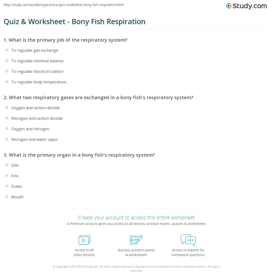 quiz worksheet bony fish respiration com print osteichthyes respiratory system worksheet