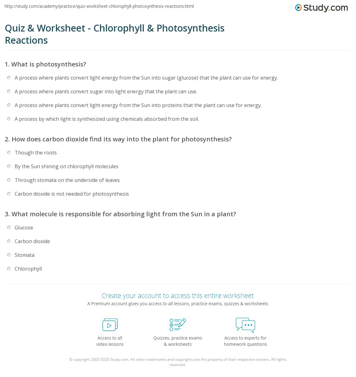 Photosynthesis Worksheet Template: Photosynthesis Summary Worksheet   Worksheet Pages,