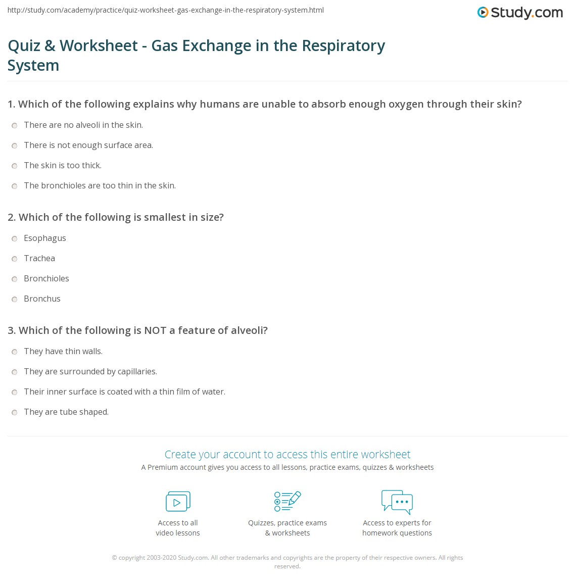 Quiz Worksheet Gas Exchange in the Respiratory System – Respiratory System Worksheet