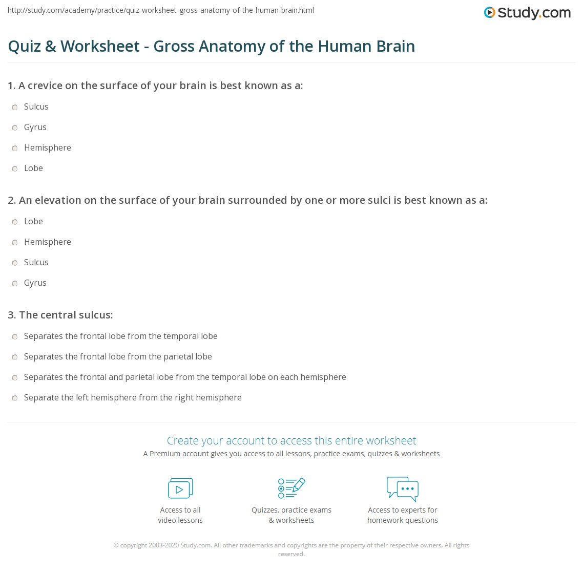 Quiz Worksheet Gross Anatomy of the Human Brain – Brain Worksheets
