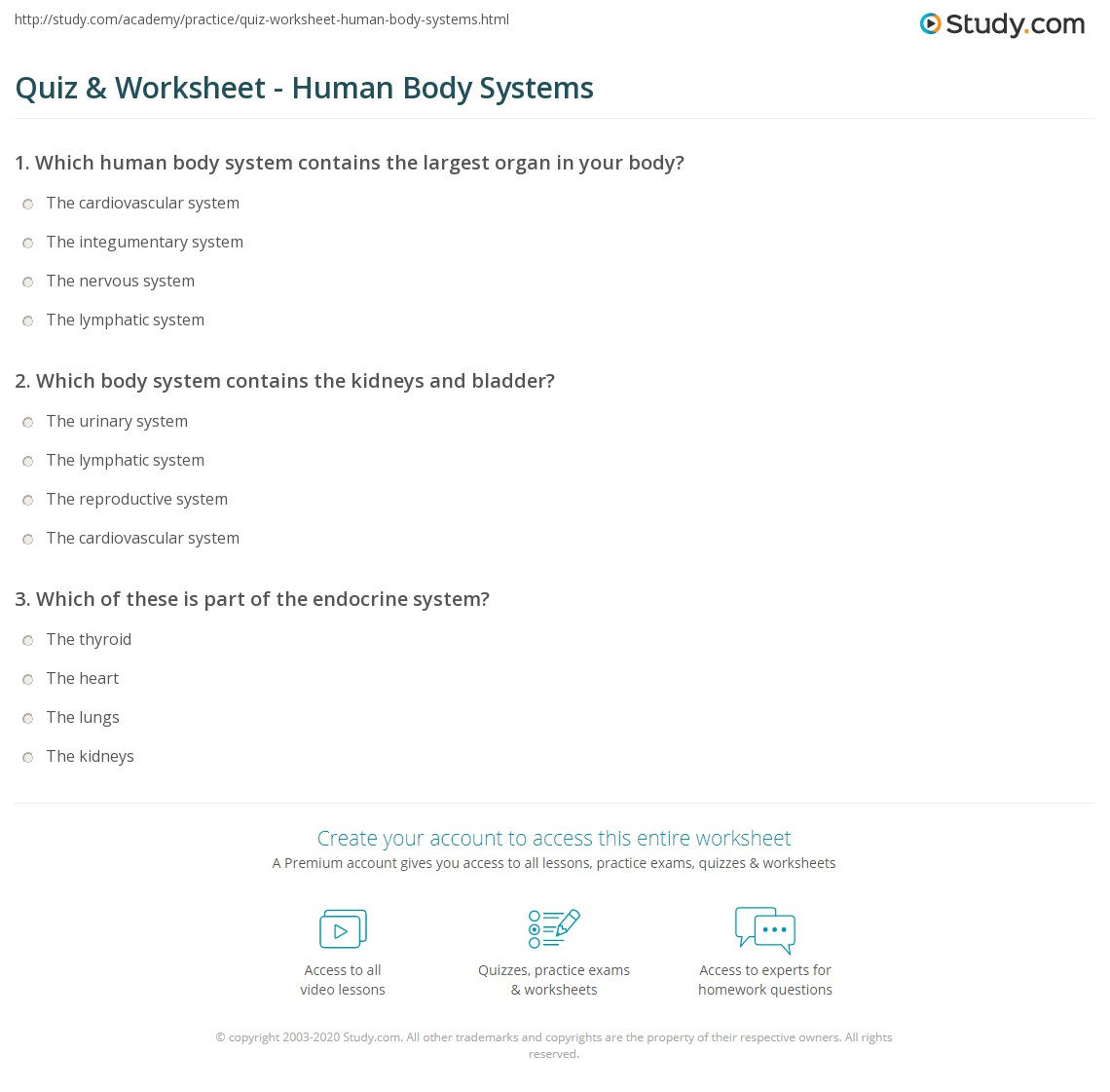 Quiz Worksheet Human Body Systems – Body System Worksheets