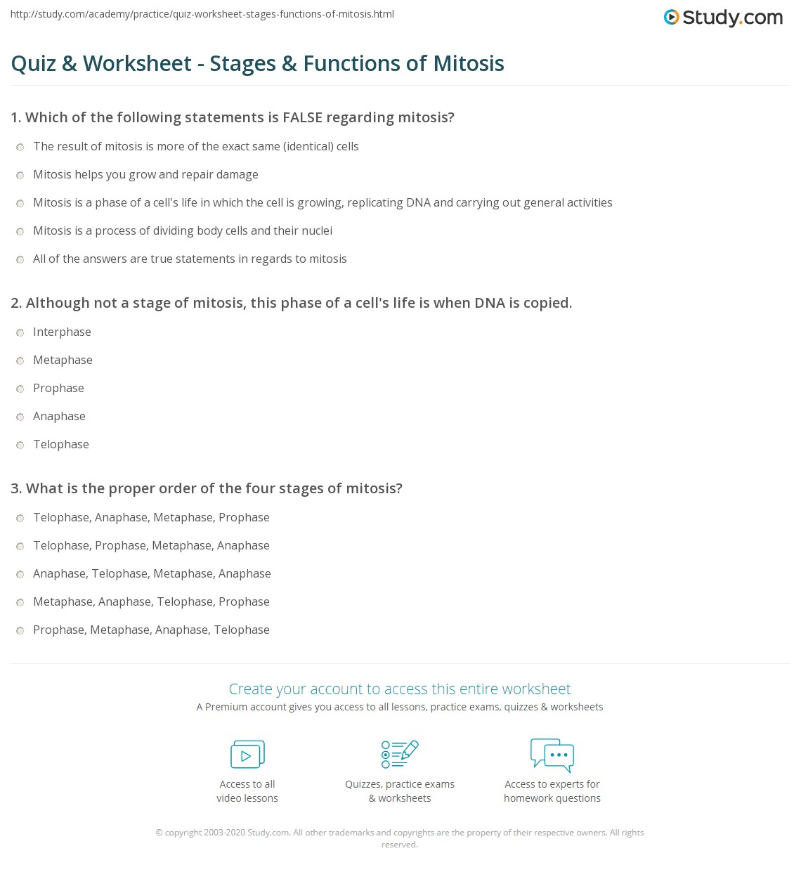 Quiz Worksheet Stages Functions of Mitosis – Phases of Mitosis Worksheet