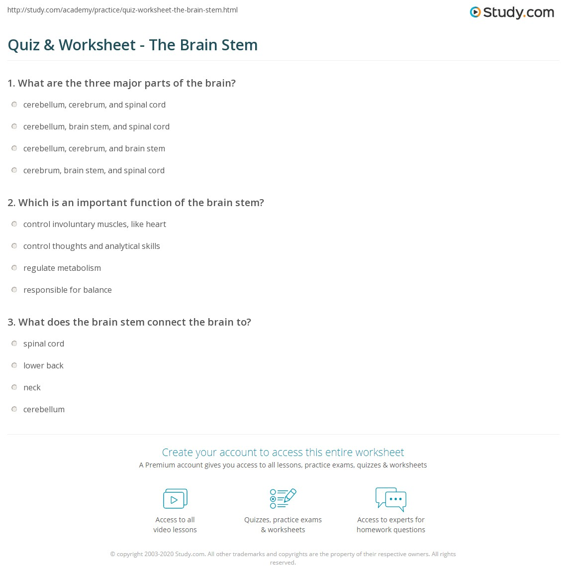 Quiz Worksheet The Brain Stem – Parts of the Brain Worksheet