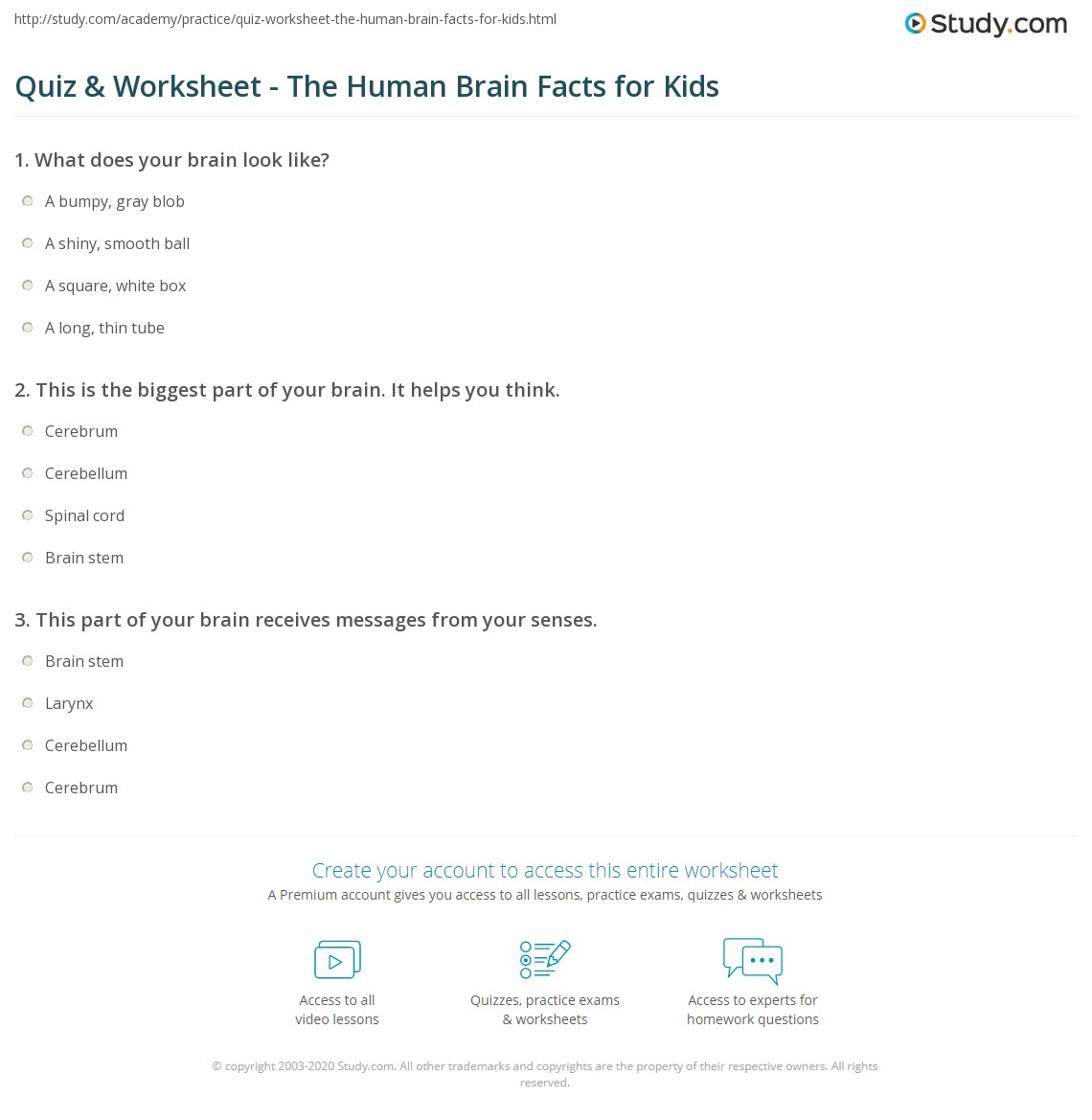 Quiz Worksheet The Human Brain Facts for Kids – Parts of the Brain Worksheet