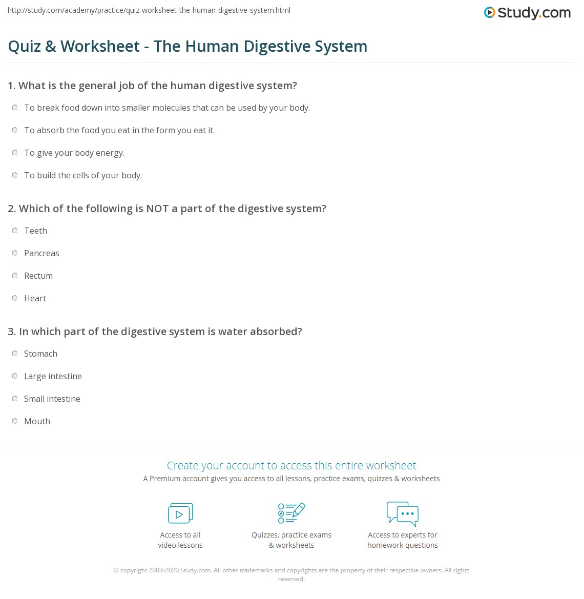 Quiz Worksheet The Human Digestive System – Digestive System Worksheet High School