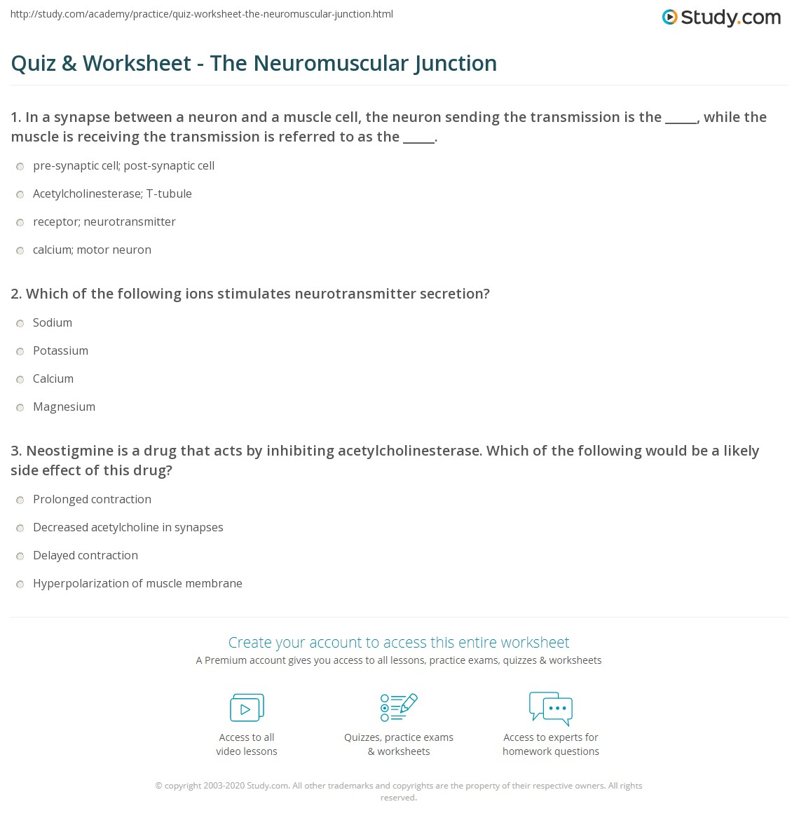Quiz Worksheet The Neuromuscular Junction – Neuron and Neuromuscular Junction Worksheet