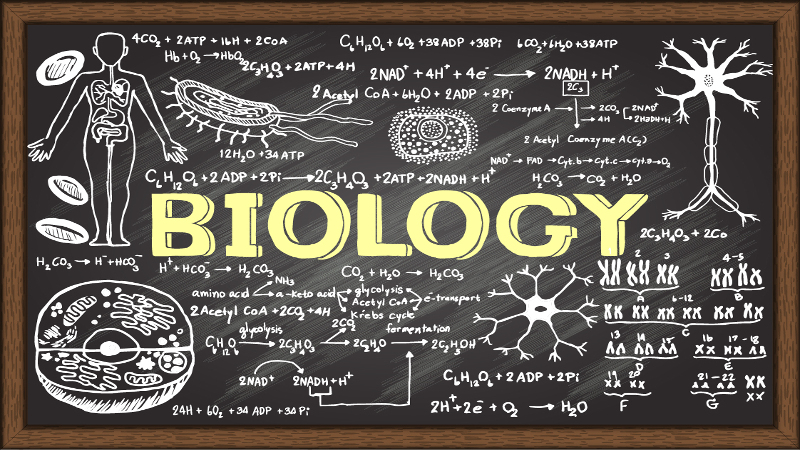 Biology universitie courses