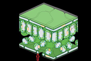 Labeled Plant Structure What Structure is Labeled in