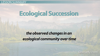 Ecological succession definition