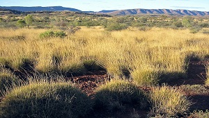 Photo of the Australian savanna.