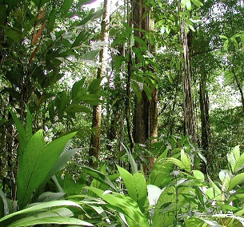 Tropical Rainforest - Lessons - Tes Teach