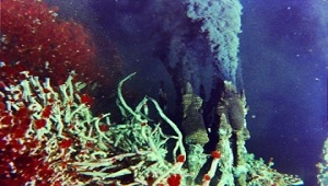An image of tube worms.