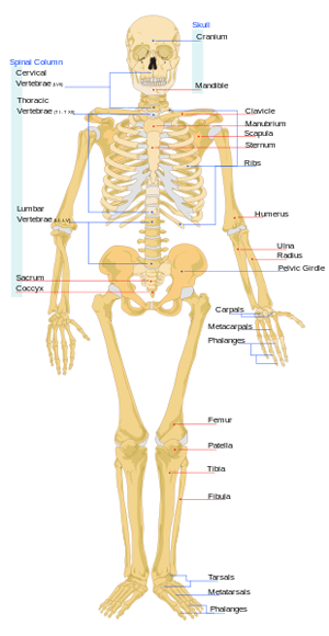 what is an organ system? - definition & pictures - video & lesson, Human Body
