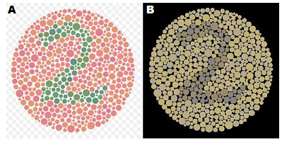essay on color blindness Color blindness is quite common, about 8% of the male population have it color blindness, or color vision deficiency, is the incapability to see color, or notice.