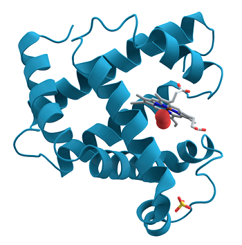 An image of a protein.